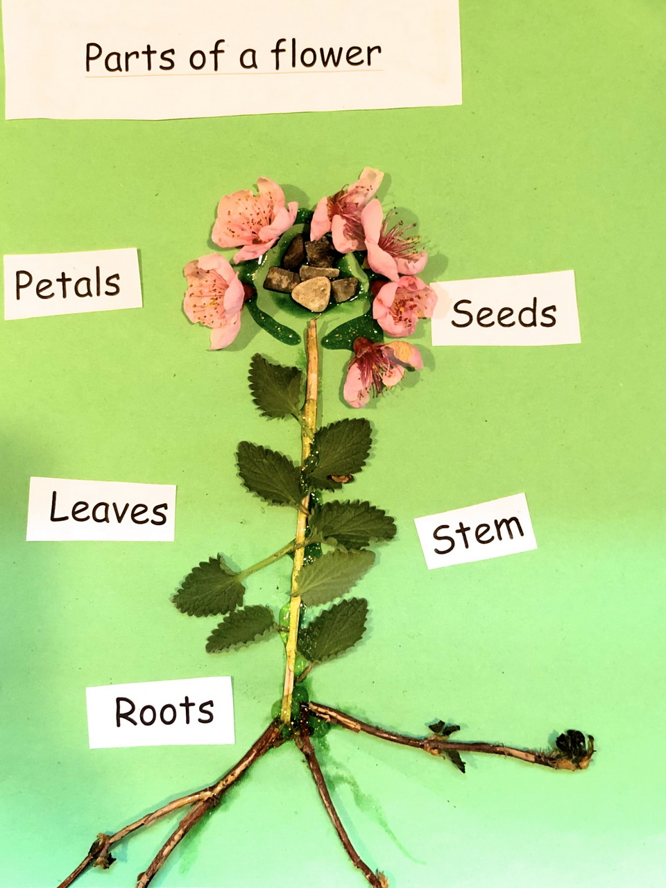 diagram showing parts of a flower